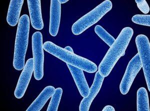 Бифидумбактерин положительно воздействует на микрофлору кишечника