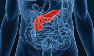 Препарат увеличивает секрецию поджелудочной железы