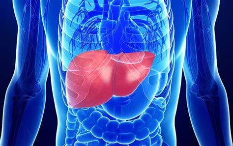 Хронический гепатит в сколько с ним живут Продолжительность жизни при хроническом гепатите В