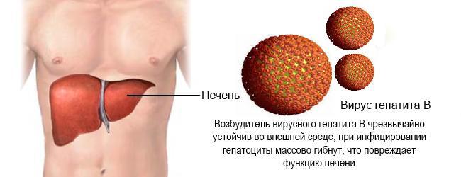 гепатит B